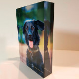 Photoblock_dog